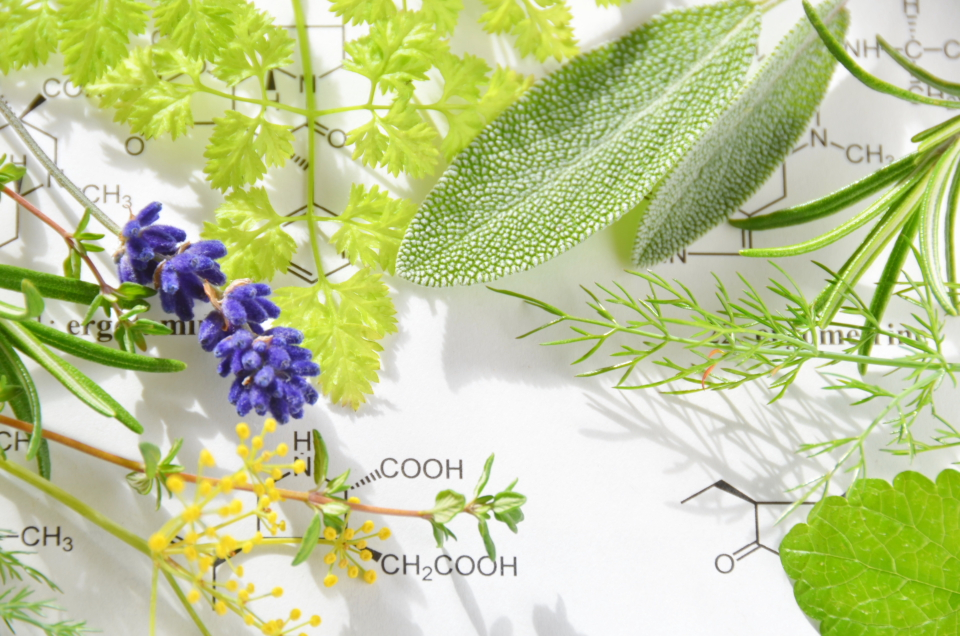 herbs on the science sheet