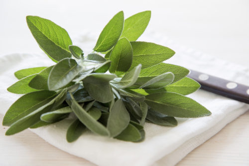 A bunch of fresh sage on light wooden table. Selective focus.